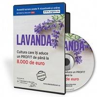 Cea mai profitabila cultura pe terenuri mici: LAVANDA