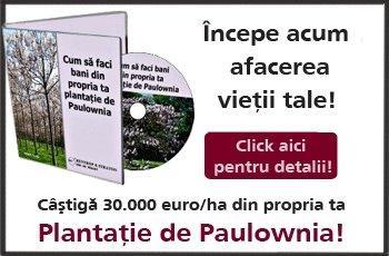 Plantatia de Paulownia - afacerea anului 2012