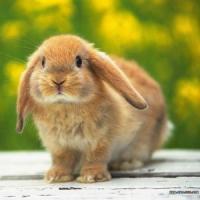 Start la afaceri cu iepuri! Iata motivele!