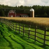 Ministrul Agriculturii: Seceta a afectat cca 40% din suprafata arabila a Romaniei