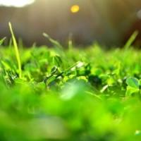 Domeniul agriculturii, pe locul al doilea ca numar de firme infiintate in 2012