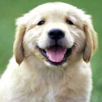 Puppy Room - Tehnica de destresare a studentilor!