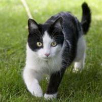 Idei de afaceri online de viitor - Pet-shop online si farmacie veterinara!