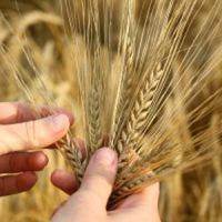 Microcredite pentru sprijinirea fermelor de familie