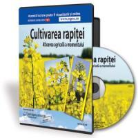 Rapita - Afacerea agricola cea mai rentabila in 2013!