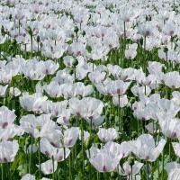 Idei de afaceri cu profituri de mii de euro la hectar din culturi exotice