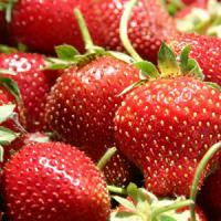 Afaceri agricole cu capsuni: Bolile care ne ruineaza plantatia de capsuni