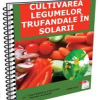 Afaceri agricole cu legume trufandale in solarii!