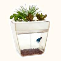 AquaFarm - Acvariul care se curata singur si  creste plante comestibile!