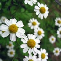 Afaceri profitabile cu cele mai valoroase plante medicinale in 2013!