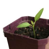 O afacere care nu poate da gres: Cultiva plante aromatice pe balcon sau in casa!