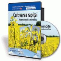 Cultivarea rapitei - afacerea agricola a momentului!