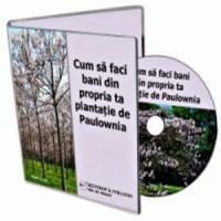 Arborii Paulownia iti pot aduce castiguri de 30.000 de euro/ha din al 3-lea an!