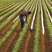 Agricultura ecologica in Romania