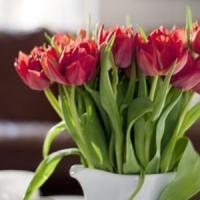 Idei de afaceri mici, simple, cu bani putini: Specialist in aranjamente florale!