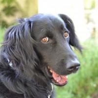 Afaceri in 2013 - Servicii de recuperare a animalelor pierdute!