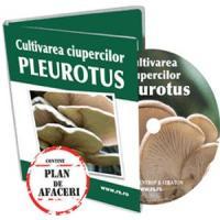 Ciuperci Pleurotus - La o cultura intensiva se obtin 5 - 6 recolte pe an!