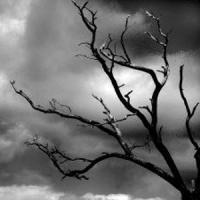 Afaceri online in 2013 - Site specializat pentru persoanele depresive!