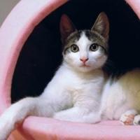 Un concept de afacere adus de peste hotare - Cafeneaua cu pisici!