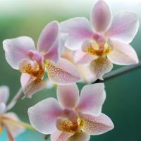 Cum sa faci bani din ... orhidee crescute in casa?