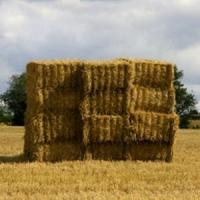 Sprijinul pentru tinerii fermieri ar putea ajunge la 70.000 euro