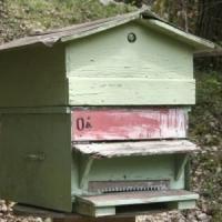 Vesti bune pentru apicultori: Se interzice o alta substanta activa, toxica pentru albine!