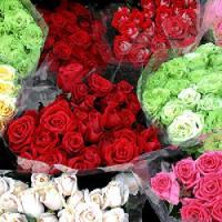 Idei de Afaceri profitabile: Bani din cultivarea de flori si plante ornamentale