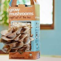 Idei de afaceri inedite: Cresterea ciupercilor la cutie