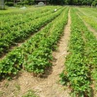 Zilele Agriculturii Romanesti in Bucuresti si Cluj-Napoca