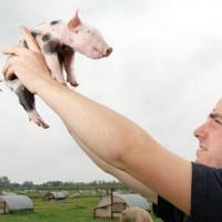Fonduri europene pentru afaceri in agricultura, destinate tinerilor fermieri!