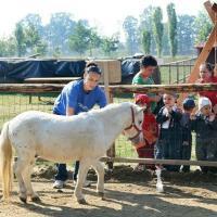 Afaceri de exceptie - ferma animalelor pentru copii