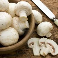 Afaceri cu Champignon - pentru ca banii tai sa se inmulteasca precum ciupercile dupa ploaie