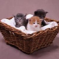 Afaceri online profitabile - Cum sa iti deschizi un pet-shop online