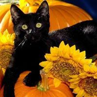 E super acum de Halloween!  Afla ce lucruri terifiante iti aduce Halloween-ul!