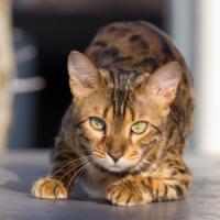 3 idei de afaceri pentru iubitorii de animale de companie!