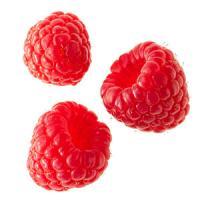 Afaceri agricole: Cele mai importante si profitabile soiuri de zmeur!
