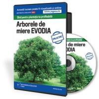Ghid pentru plantatia ta profitabila - Arborele de miere Evodia
