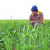 Pana pe 15 februarie, fermierii vor primi banii pentru culturile de primavara
