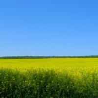 Bio-Romania sustine 'TVA Verde' pentru produsele agroalimentare romanesti