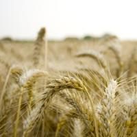 Romania poate deveni un mare exportator de hrana bio