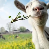 Cum sa faci bani din cresterea caprelor