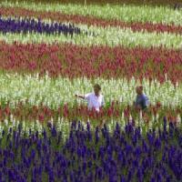 Afaceri agricole de succes cu florile-confetti