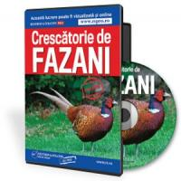 Cum se infiinteaza cu succes o crescatorie de fazani?
