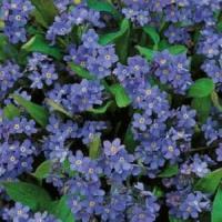 Idei de afaceri: Ghivecele BIO cu plante medicinale si aromatice