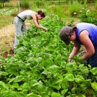 Fermierii vor obtine credite pe baza certificatelor de depozit la cereale