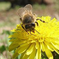Fonduri pentru apicultori si modificari in agenda SCFCAH
