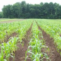 Guvernul va modifica Legea terenurilor agricole