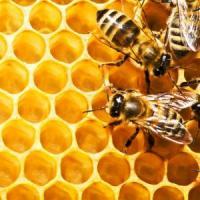 Cel mai mare producator de miere din Europa: Ucraina!