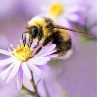 Crescatorii de albine vor putea accesa fonduri pentru agricultura ecologica