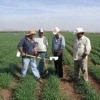 Programul PNDR 2014-2020, sanse pentru fermieri